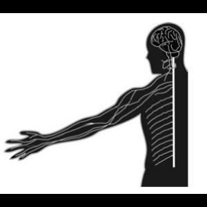 Dynamic Systems Approach to Neurological Rehabilitation