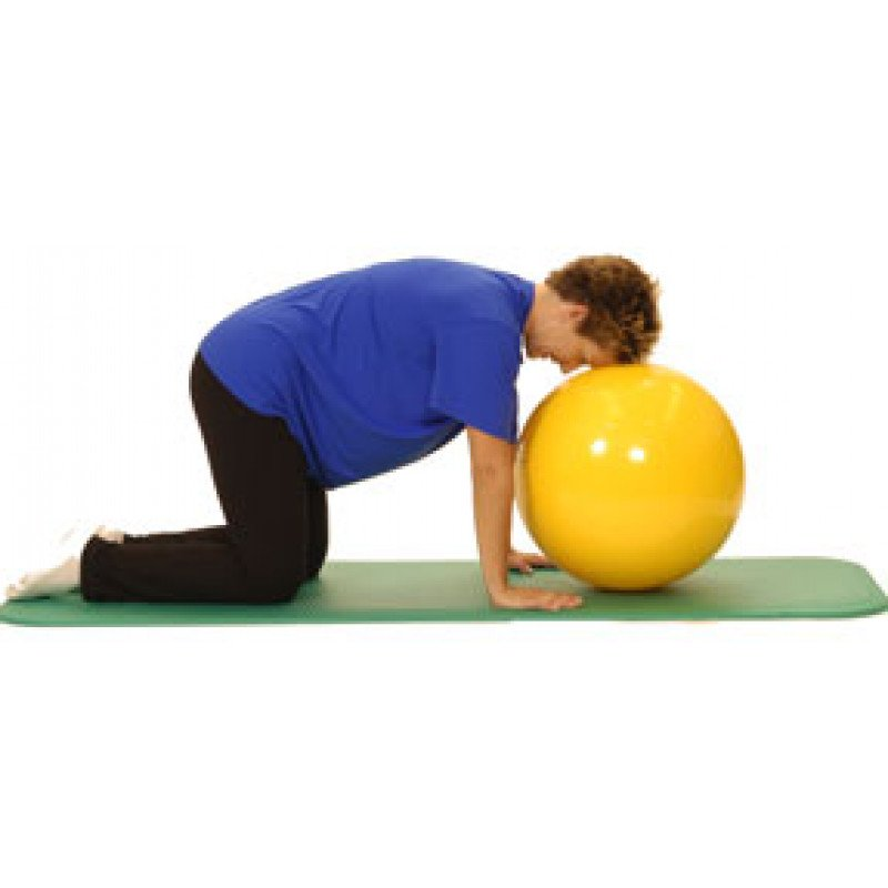Pro Series Exercise Ball Cervical Stabilization in Quadruped