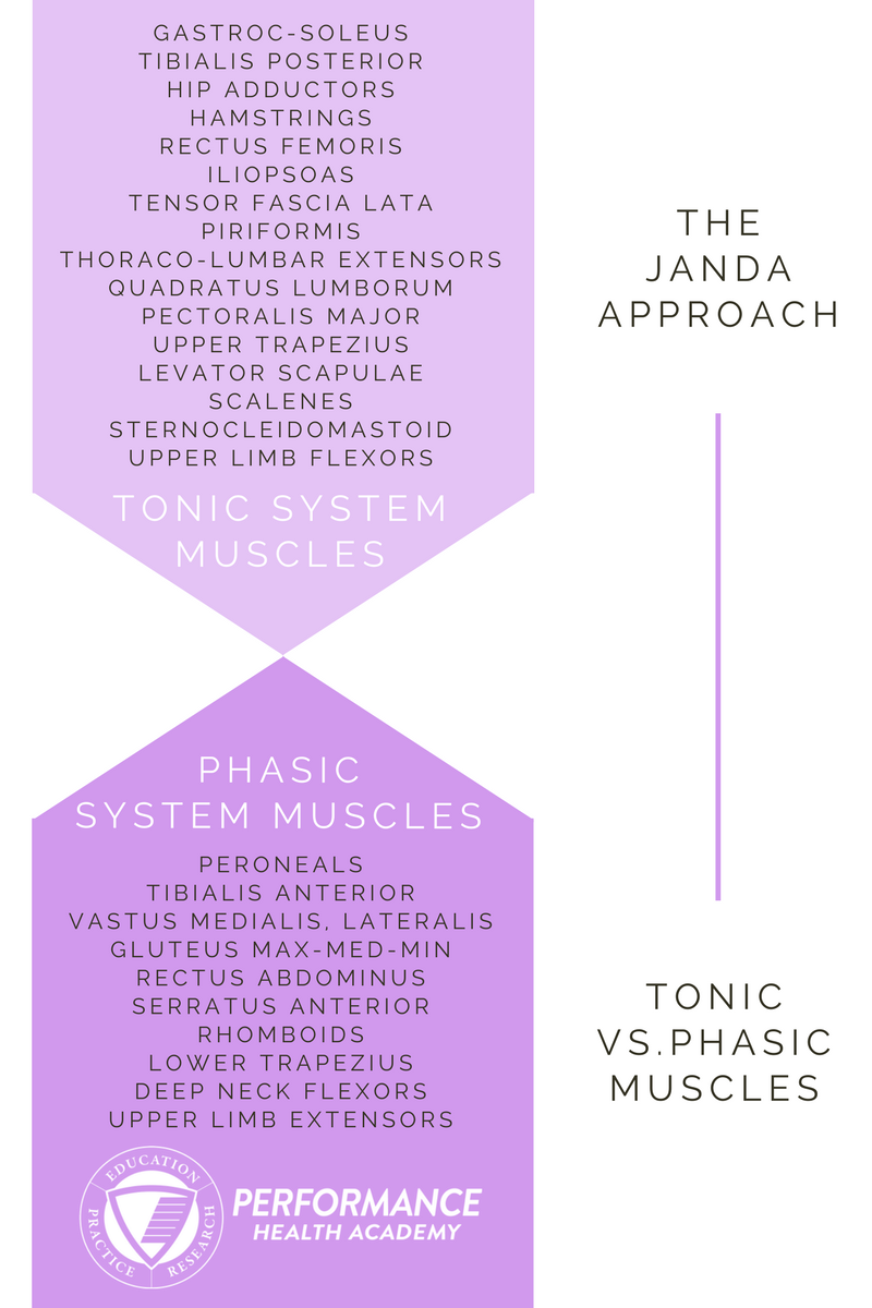Tonic vs. Phasic muscles-2