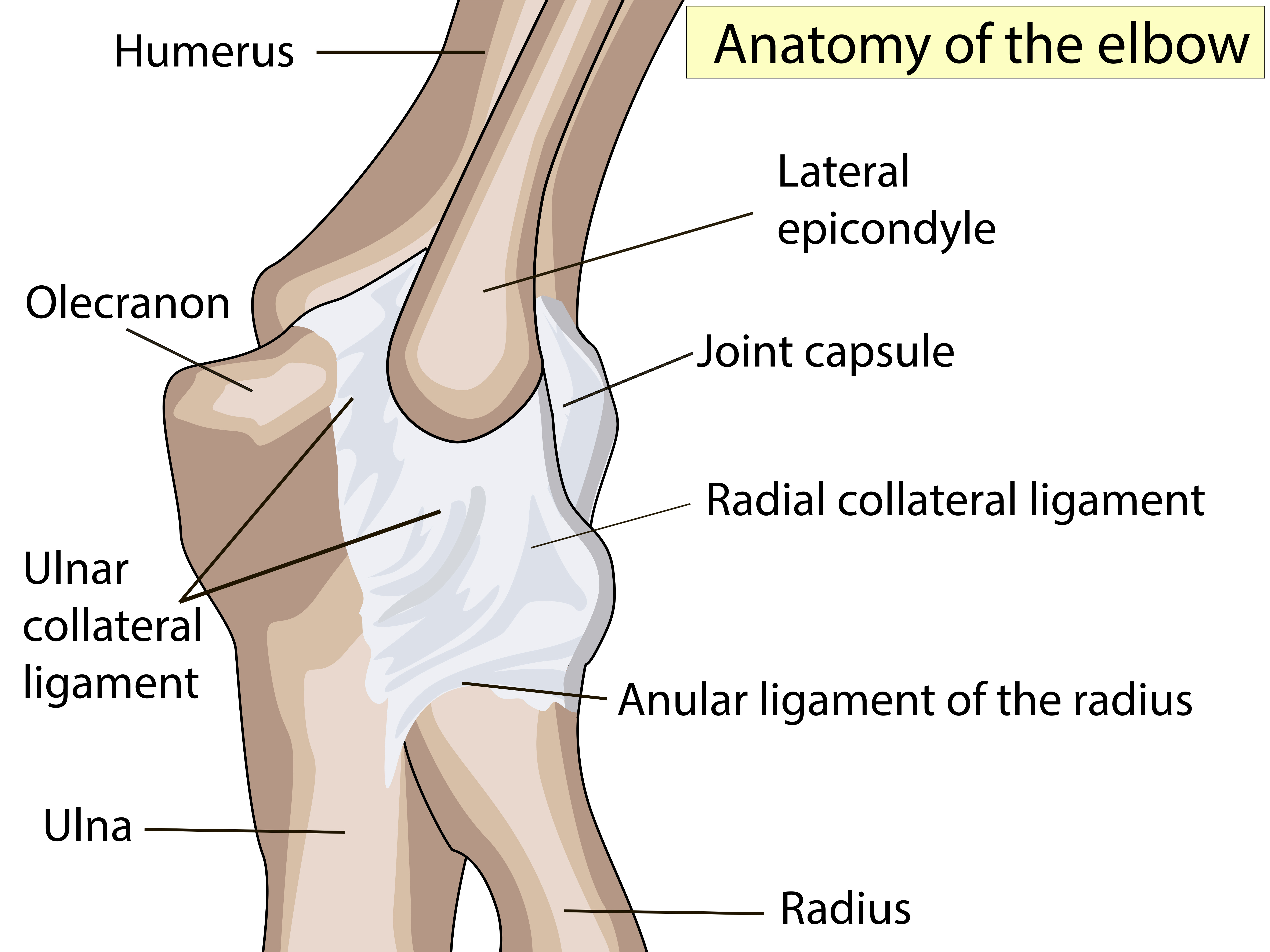 UCL Injury Overview