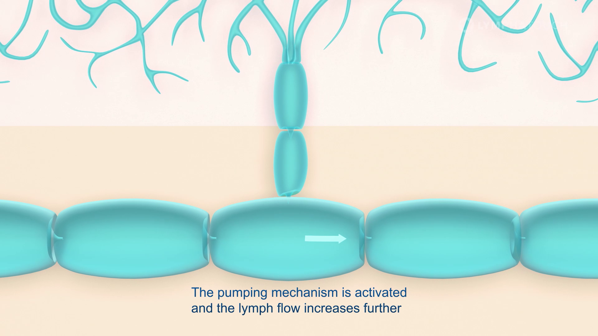 Lymphatouch